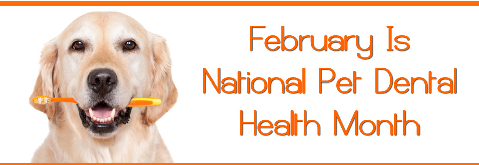 Image result for february is pet dental month
