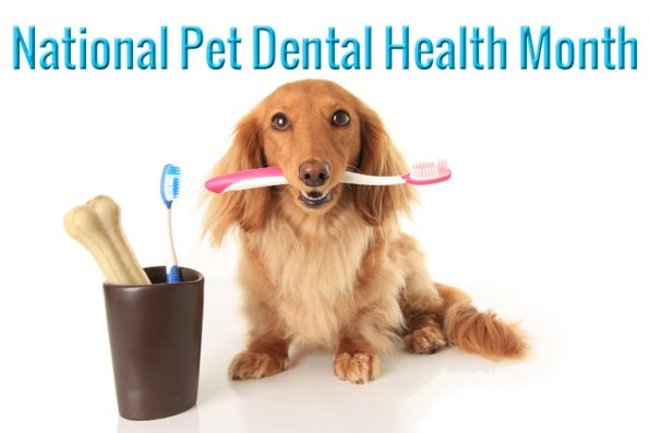 February is National Pet Dental Health Month ...